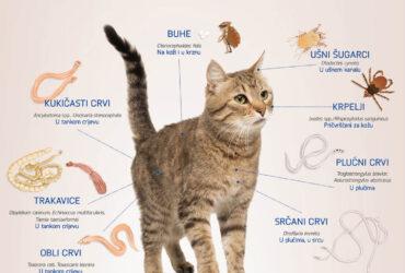 Učestalost pojave parazita kod mačaka